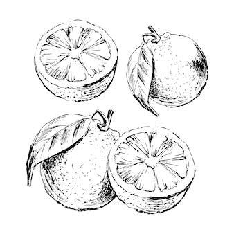 Ręcznie rysowane akwarela na białym tle. ilustracja owoców pomarańczy