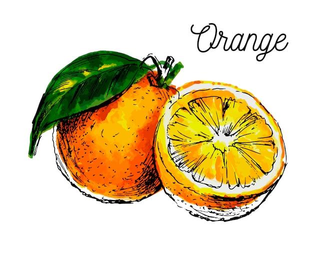 Ręcznie rysowane akwarela na białym tle. ilustracja owocowa pomarańcze