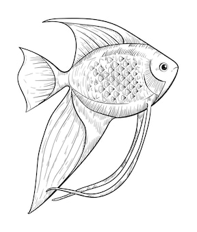 Ręcznie rysowane akwarium skalary na białym tle