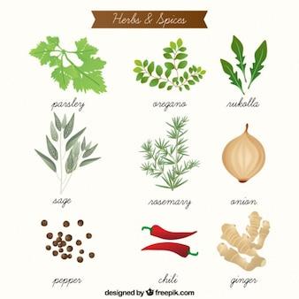 Ręcznie rysowane aromatyczne zioła i przyprawy kolekcji