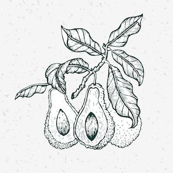 Ręcznie rysowane awokado