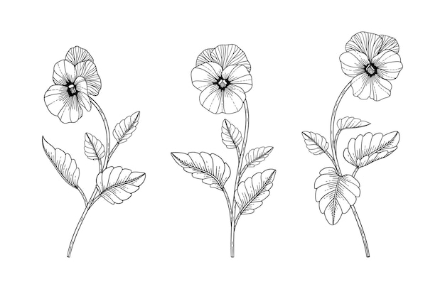 Ręcznie rysowane bratek ilustracja kwiatowy z grafiką na białym tle.