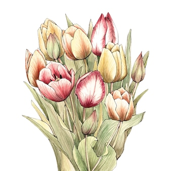 Ręcznie rysowane bukiet tulipanów akwarela