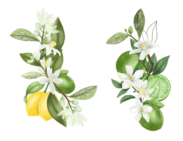 Ręcznie rysowane bukiety i kompozycje z kwitnących gałęzi drzew cytrynowych