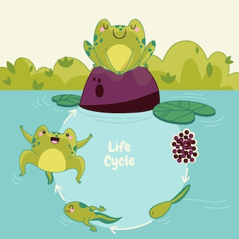 Ręcznie rysowane cykl życia żaby