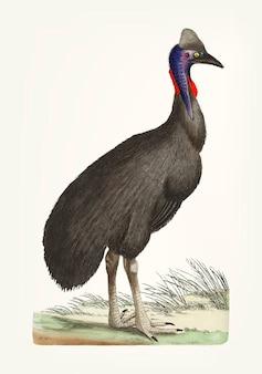 Ręcznie rysowane czarny kazuar