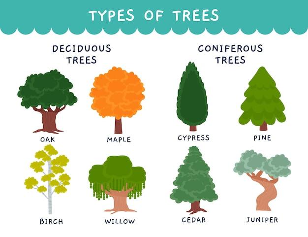 Ręcznie rysowane drzewa liściaste i iglaste