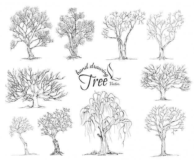 Ręcznie rysowane drzewa na białym tle