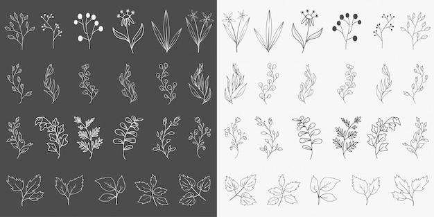 Ręcznie rysowane elementy botaniczne