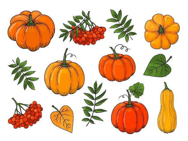 Ręcznie rysowane elementy jesień. dynia, jarzębina, liście. ilustracja. kolorowy. na białym tle.