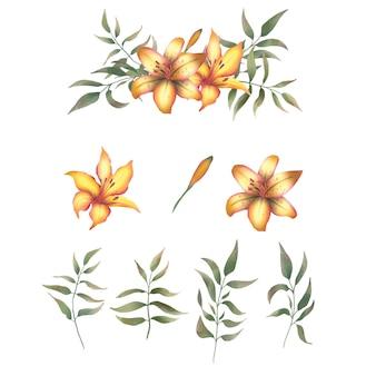 Ręcznie rysowane elementy lilii
