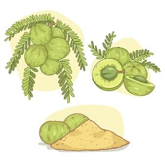 Ręcznie rysowane elementy owoców amla