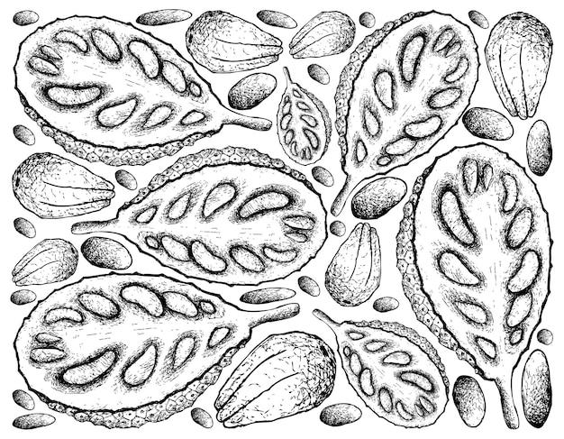 Ręcznie rysowane foka dojrzałych jackfruit
