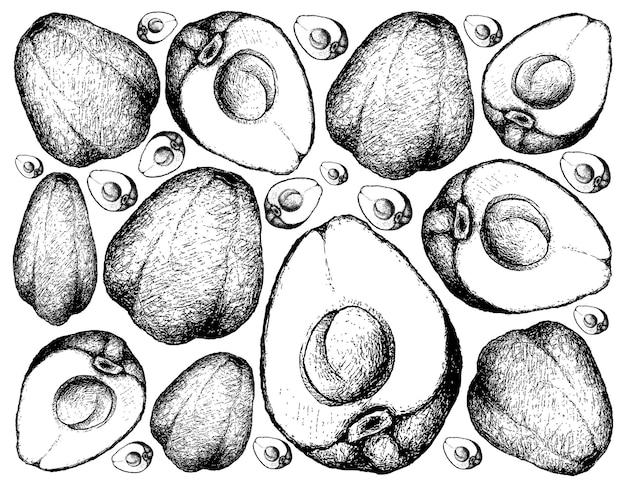 Ręcznie rysowane foka pomerac lub malay apple