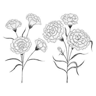 Ręcznie rysowane goździków kwiaty i liście rysunek ilustracja.