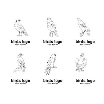 Ręcznie rysowane grafiki ołówkiem. zestaw ptaków drapieżnych.