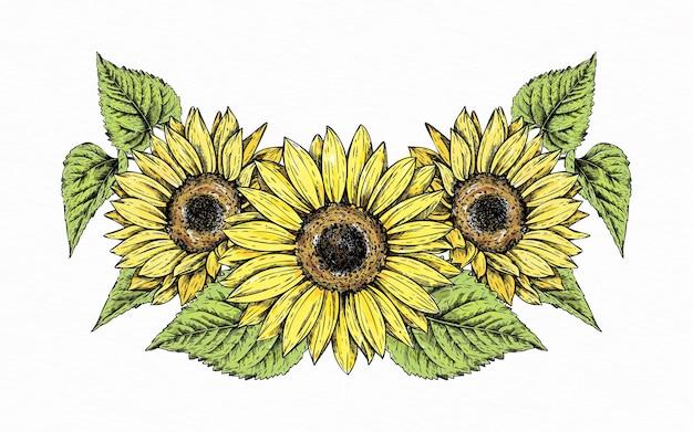 Ręcznie rysowane granica słonecznika