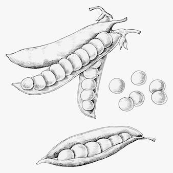 Ręcznie rysowane groszek i strąki