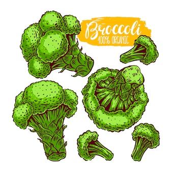 Ręcznie rysowane ilustracja brokuły