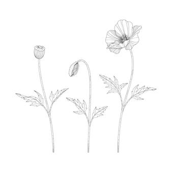 Ręcznie rysowane ilustracja kwiatowy maku z grafiką na białym tle. zaprojektuj wystrój logo, karty, zapisz datę, powitanie, zaproszenia ślubne, plakat, baner.