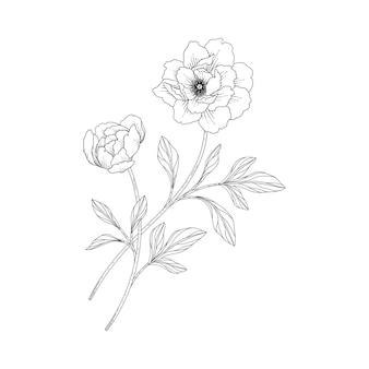 Ręcznie rysowane ilustracja kwiatowy piwonia z grafiką na białym tle.