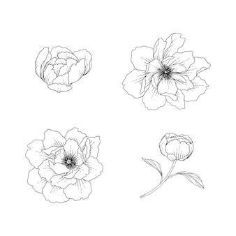 Ręcznie Rysowane Ilustracja Kwiatowy Piwonia Z Grafiką Na Białym Tle. Premium Wektorów