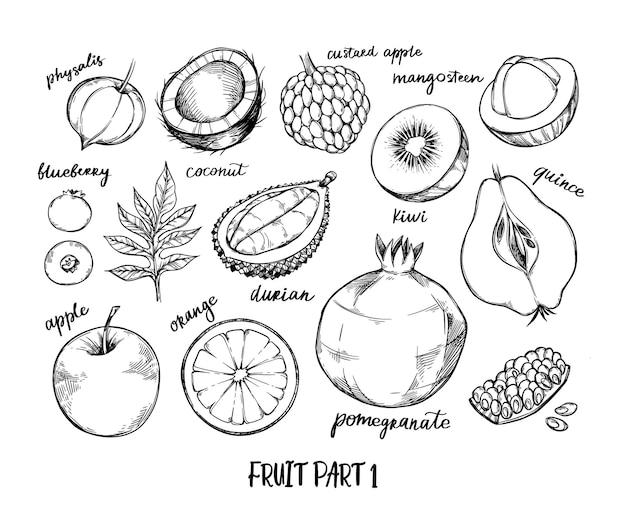 Ręcznie rysowane ilustracja - owoce tropikalne i egzotyczne. physalis, kiwi, borówka, pomarańcza, jabłko