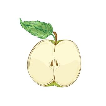 Ręcznie rysowane ilustracja pół jabłka
