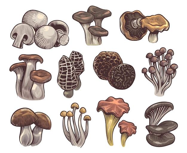 Ręcznie rysowane ilustracja projektu grzyby