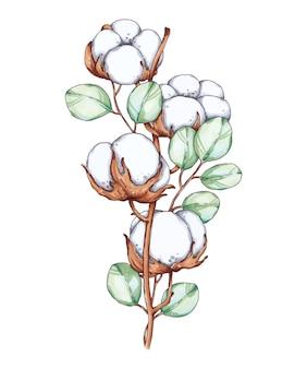 Ręcznie rysowane ilustracja z gałązką bawełny i eukaliptusem