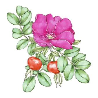 Ręcznie rysowane ilustracja z kwiatem dzikiej róży i liśćmi