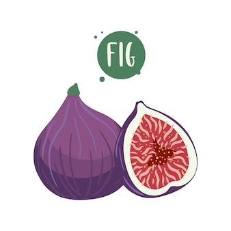 Ręcznie rysowane ilustracje owoców figi.