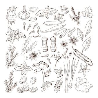 Ręcznie rysowane ilustracje różnych ziół i przypraw. zestaw zdjęć wektorowych izolować na białym tle