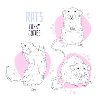 Ręcznie rysowane ilustracje. śliczny realistyczny szczur.