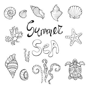 Ręcznie rysowane ilustracje wektorowe - zbiór muszelek. zestaw morski. idealny na zaproszenia, kartki okolicznościowe, plakaty, wydruki, banery, ulotki itp