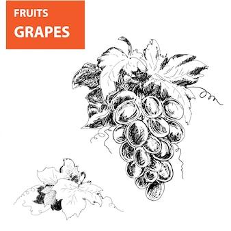 Ręcznie rysowane ilustracje winogron