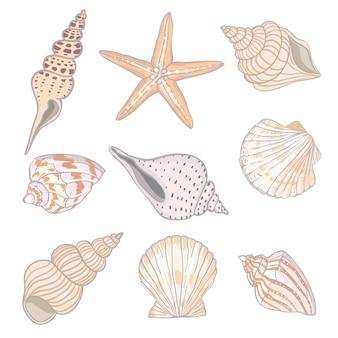 Ręcznie rysowane ilustracje - zbiór muszelek. zestaw morski.