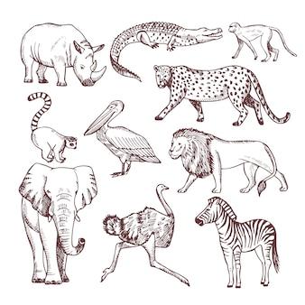 Ręcznie rysowane ilustracje zwierząt afrykańskich