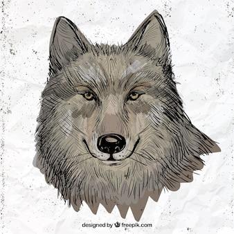 Ręcznie rysowane ilustracji wilka
