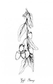 Ręcznie rysowane jagody goji na białym tle