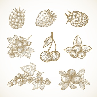 Ręcznie rysowane jagody ilustracje wektorowe kolekcja wiśnia przegryzki porzeczka żurawina truskawka i ...