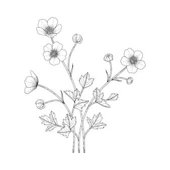 Ręcznie rysowane jaskier kwiatowy ilustracja z grafiką na białym tle. zaprojektuj wystrój logo, karty, zapisz datę, zaproszenia ślubne, plakat, baner.