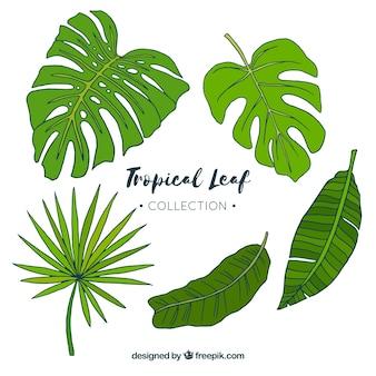 Ręcznie rysowane klasyczna tropikalna kolekcja liści