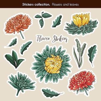 Ręcznie rysowane kolekcja naklejki aster kwiatów i liści. szczegółowo ilustracja botaniczna w stylu wyciągnąć rękę.
