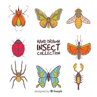 Ręcznie rysowane kolekcja owadów