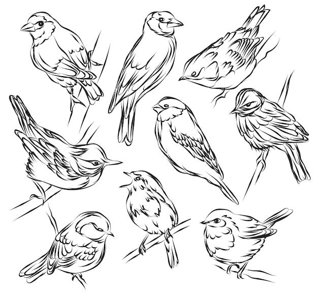 Ręcznie rysowane kolekcja ptaków czarno-białe