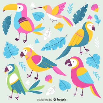 Ręcznie rysowane kolekcja ptaków egzotycznych