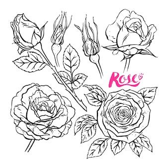 Ręcznie rysowane kolekcja róż