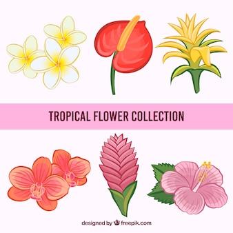 Ręcznie rysowane kolekcja tropikalnych kwiatów