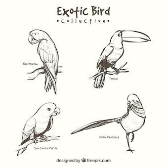 Ręcznie rysowane kolekcji egzotycznych ptaków